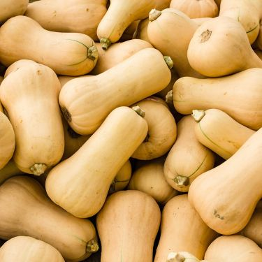 Butternut Squash, Locally Grown  - HOLIDAY PRE-ORDER ONLY