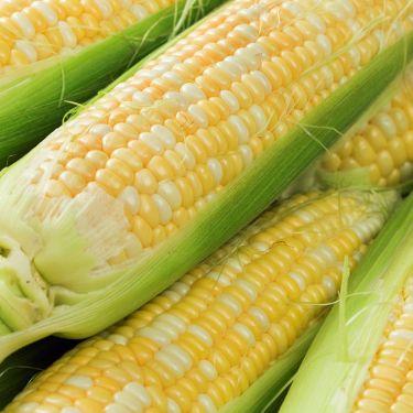 Summer Sweet Corn, Individual Ear